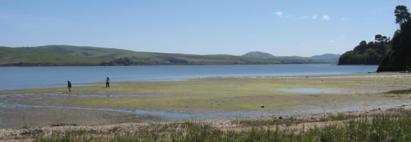 Daytrip to Tomales Bay