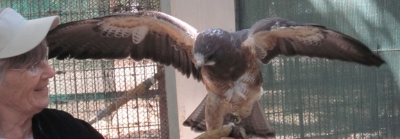 The California Raptor Center